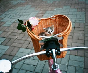 cat, cute, and bike image