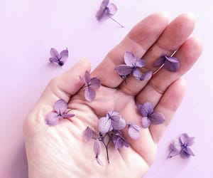 flowers, hand, and lavender image