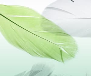 feathers, wallpapers, and backgrounds image
