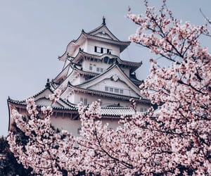 architecture, cherry blossoms, and cityscape image