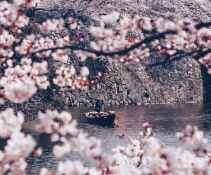 background, flowers, and nature image