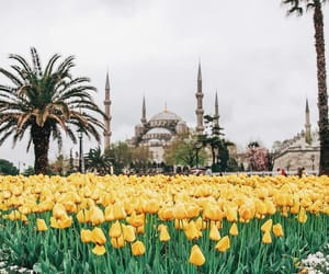 istanbul and yellow image