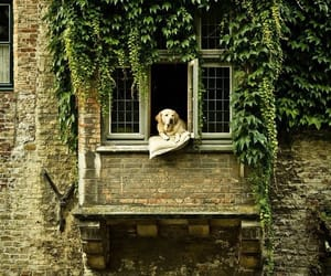 dog, life, and nature image