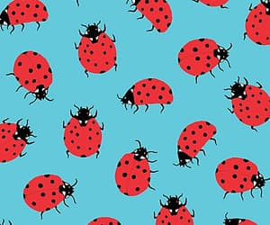 ladybug, background, and pattern image