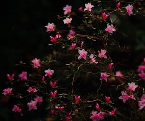 bloom, blossoms, and dark image