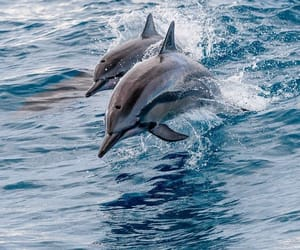 animal, ocean, and pretty image