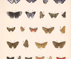 animals, gif, and butterflies image
