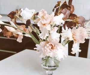 flower, home, and sweet image