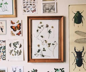 botanical, frames, and plants image