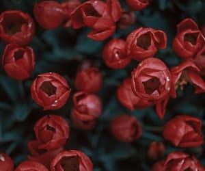 beautiful, beauty, and flora image