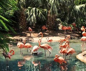 flamingos, style, and nature image