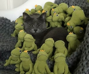 animals, cat, and frogs image