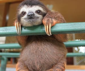 animals, sloth, and cute image