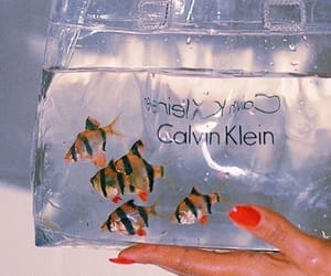 fish, aesthetic, and Calvin Klein image