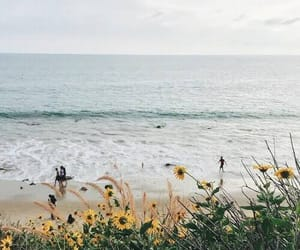 flowers, sea, and nature image