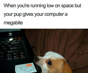 computer, funny, and meme image