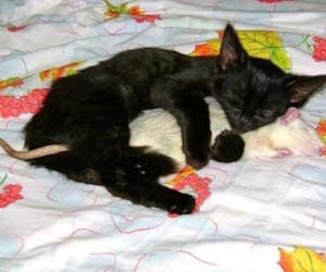cat, rat, and mouse image