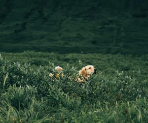 dog and nature image