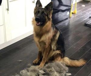 animal, fur, and cute image