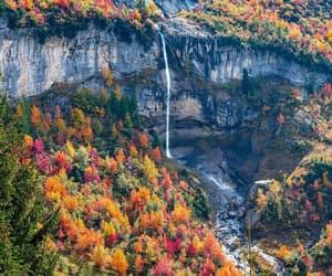 autumn, belleza, and colores image