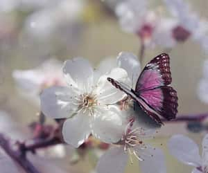 article, butterfly, and poem image