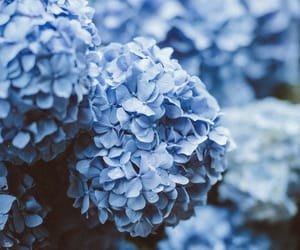 blue, floral, and flowers image
