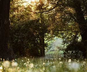 forest, light, and meadow image