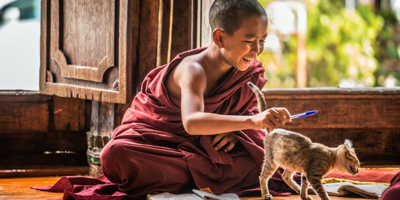 article, felicidade, and zen image