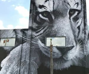 arte, tigre, and graffiti image