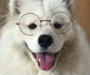 animal, cool, and dog image