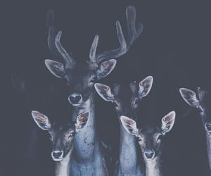 animals, deer, and beauty image