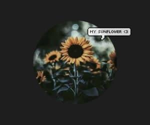 background, sunflower, and girassol image