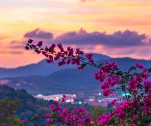 flowers, goals, and sky image