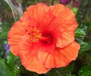 flower, summer, and orange image