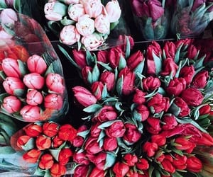 beautiful, flowers, and picture image