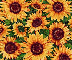 headers, sunflower, and capas image