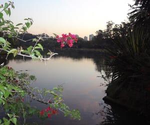 lagoa image