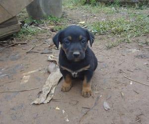 cachorro image