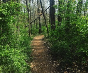 healthy, hiking, and dirt path image