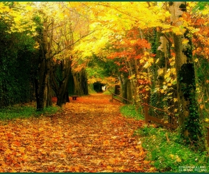 autumn, breathtaking, and coolest image