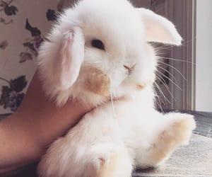 bunny, animal, and theme image