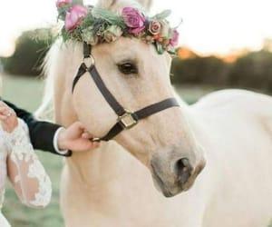 horse, horses, and white image