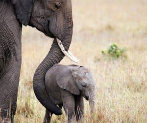 animals, child, and elephant image