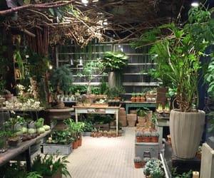 garden, gardening, and green house image