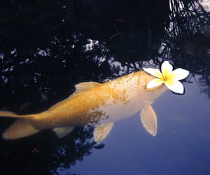 fish, flower, and water image