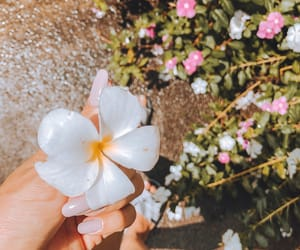 flor, inspiration, and nails image