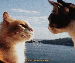 cats, adorable, and friendship image