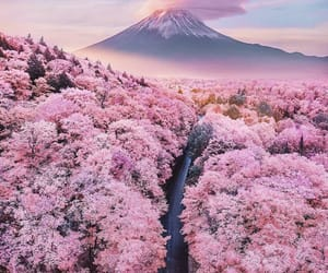 japan, pink, and flowers image