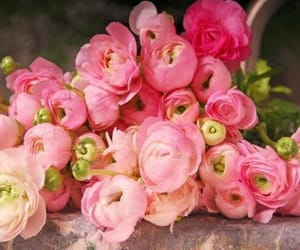flowers, pink, and ranunculus image