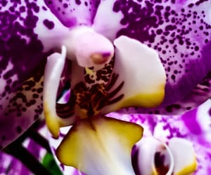 flora, flowers, and orchids image